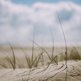 bergen duinen