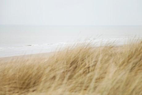 LR blooming duinen 5.jpg