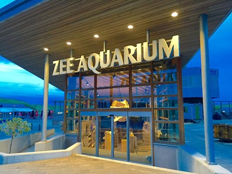 to-do-blooming-hotel-zee-aquarium.jpg